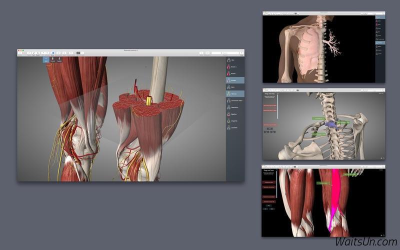 Essential Anatomy 5 for Mac 5.0.2 破解版 – 医学软件基本骨架解剖软件-麦氪派