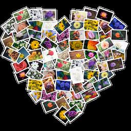 FigrCollage 2.5.10 Mac 破解版 – 自定义照片拼贴应用